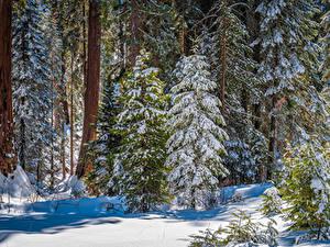 Fotos Vereinigte Staaten Parks Wald Kalifornien Bäume Schnee Kings Canyon National Park Natur