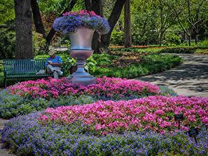 Fotos Vereinigte Staaten Park Geranien Texas Design Dallas Arboretum Natur