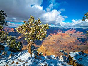 Bilder USA Park Grand Canyon Park Felsen Wolke Bäume Schnee Arizona