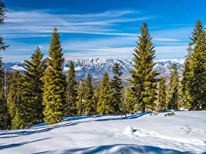 Fotos Vereinigte Staaten Parks Kalifornien Schnee Bäume Kings Canyon National Park