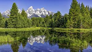 Bilder Vereinigte Staaten Park See Gebirge Wälder Fichten Grand Teton National Park Natur