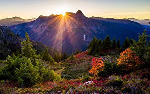 Bilder USA Park Gebirge Sonnenaufgänge und Sonnenuntergänge Fichten Strauch Lichtstrahl Sonne Washington State Park