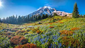 Hintergrundbilder USA Park Berg Grünland Bäume Mount Rainier National Park