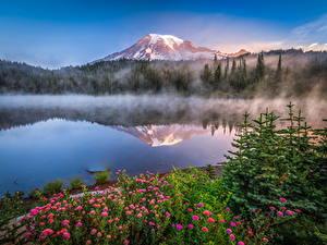 Bilder USA Park Berg See Spiegelt Mount Rainier National Park