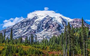 Bilder Vereinigte Staaten Parks Berg Fichten Schnee HDR Mount Rainier National Park Natur