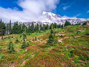 Bilder Vereinigte Staaten Parks Berg Washington Bäume Wolke Mount Rainier National Park