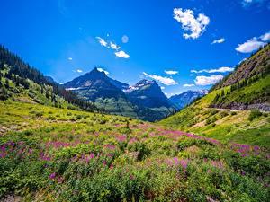 Fotos Vereinigte Staaten Park Gebirge Himmel Gras Glacier National Park Natur