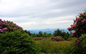 Bilder Vereinigte Staaten Park Rhododendren Strauch Carolina Roan Mountain Rhododendron Gardens Natur