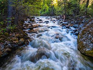 Fotos Vereinigte Staaten Park Fluss Steine Yosemite Laubmoose Bäume Kalifornien