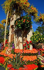 Bilder Vereinigte Staaten Park Rosen Kalifornien Design Rose Parade Pasadena Blumen