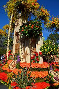 Bilder Vereinigte Staaten Parks Rosen Kalifornien Design Rose Parade Pasadena Blüte