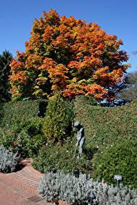 Hintergrundbilder Vereinigte Staaten Park Skulpturen Chicago Stadt Strauch Bäume Botanic Garden Natur