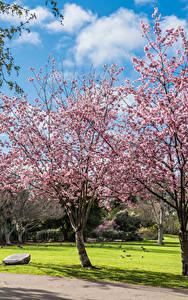 Fotos Vereinigte Staaten Park Frühling Blühende Bäume Kalifornien Rasen Huntington Beach Park