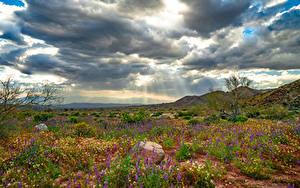 Fotos USA Parks Frühling Kalifornien Wolke Joshua Tree National Park, wildflowers