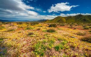 Hintergrundbilder USA Parks Frühling Berg Kalifornien Wolke Joshua Tree National Park