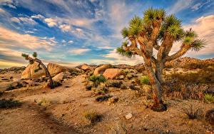 Fotos USA Park Steine Himmel Kalifornien Bäume Joshua Tree National Park Natur