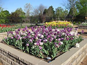 Fotos Vereinigte Staaten Park Tulpen Honor Heights Park Natur