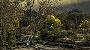 Bilder Vereinigte Staaten Park Wasserfall Steine Texas Bäume Austin TX Bull Creek District Park Natur