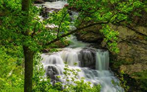 Bilder USA Park Wasserfall Ast Great Smoky Mountains National Park Natur