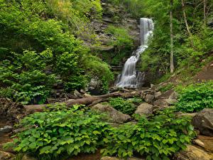 Bilder USA Park Wasserfall Steine Felsen Strauch Blackwater Falls State Park Virginia