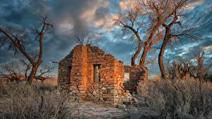 デスクトップの壁紙、、アメリカ合衆国、廃墟、木、Hanksville, Utah, Cottonwood Trees、自然