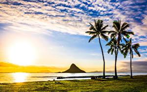 Fotos USA Landschaftsfotografie Sonnenaufgänge und Sonnenuntergänge Küste Hawaii Palmen Wolke Sonne Natur