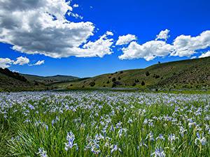 Bilder USA Himmel Schwertlilien Grünland Kalifornien Hügel Wolke Bridgeport Natur