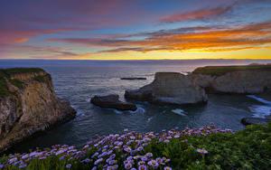 Bilder Vereinigte Staaten Sonnenaufgänge und Sonnenuntergänge Küste Gänseblümchen Felsen Horizont Shark Fin Cove