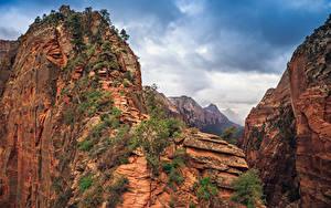 Hintergrundbilder Vereinigte Staaten Zion-Nationalpark Park Bäume Felsen Canyon Natur