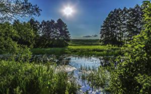 Hintergrundbilder Ukraine Bäume Sonne Gras Sumpf Poltava