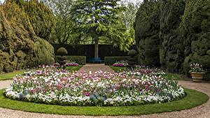Hintergrundbilder Vereinigtes Königreich Garten Tulpen Design Rasen Strauch Bäume Ascott House Garden Natur