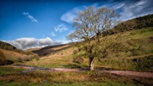 Bakgrunnsbilder Storbritannia Fjell Wales Trær Brecon