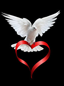 Papéis de parede Dia dos Namorados Columbas Fundo preto Branco Coração Animalia