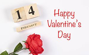 Fotos Valentinstag Rose Weißer hintergrund Englischer Text Rot Blüte