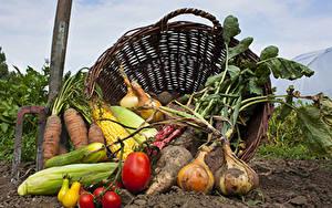 Bilder Gemüse Zwiebel Kukuruz Tomate Mohrrübe Weidenkorb Boden