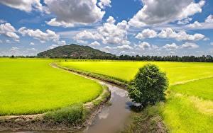 Bilder Vietnam Felder Kanal Wolke Trung Khanh District, Cao Bang (province)