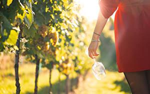 Fotos Weinberg Schmuck Bokeh Hand Weinglas Mädchens