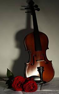 Fonds d'écran Violon Rosiers Bordeaux couleur Musique