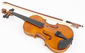 Hintergrundbilder Violine Weißer hintergrund Musik