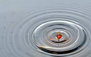 Fotos Wasser Hautnah Kreise Natur