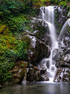 Bilder Wasserfall Felsen Ast Laubmoose Natur