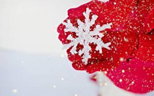 Fotos Winter Hautnah Schneeflocken Hand Handschuh Rot