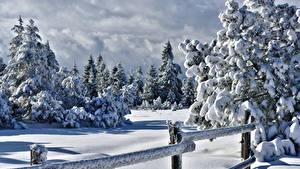 Bilder Winter Zaun Schnee Fichten Natur