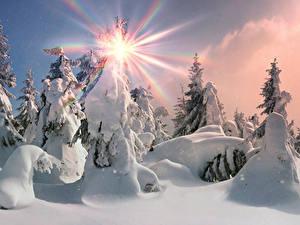 Hintergrundbilder Winter Fichten Schnee Sonne Lichtstrahl