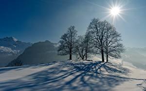 Bilder Winter Schnee Bäume Schatten Sonne Lichtstrahl