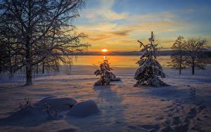 Hintergrundbilder Winter Sonnenaufgänge und Sonnenuntergänge Himmel Schnee Fichten Bäume Sonne Arvika
