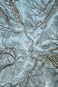 Fotos Winter Bäume Ast Schnee Untersicht Ansicht von unten Natur