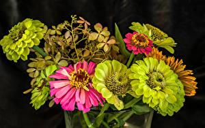Bureaubladachtergronden Zinnia Van dichtbij Lichtgroen bloem