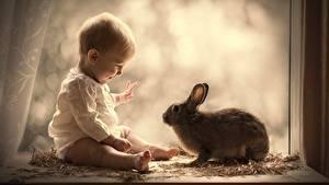 Bilder Kaninchen Baby Fenster Sitzen Kinder