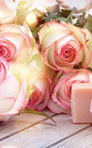 Hintergrundbilder Rose Kerzen Hautnah Bretter Blumen